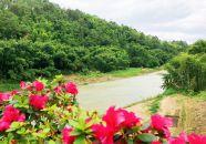 高要区水南镇 创文创森联动 美了环境乐了群众