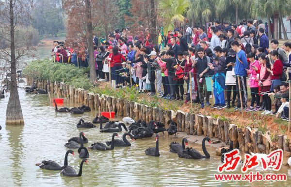 游客近距离欣赏珍禽。 澳门巴黎人娱乐记者 梁小明 摄