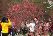 花开迎新春 景区人气旺
