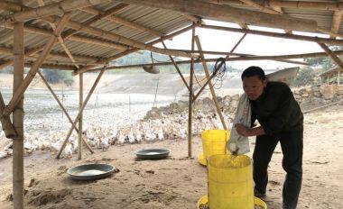 德慶優秀退伍軍人郭海鋒創辦養殖合作社成為養魚達人