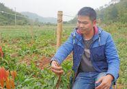 科技下乡助创业 打工者变身农场主