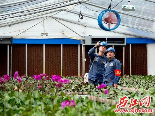 供电人员在兰花种植基地检查用电设备。 西江日报通讯员 陈敏霞 摄