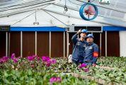 四会供电温暖兰花成长路 3年累计增容近3000千伏安以满足种植户需求