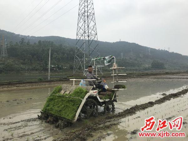 高要种粮大户余业飞正开动高速插秧机开展春种作业。 西江日报记者 谢江涛 摄