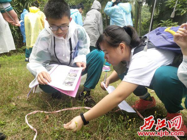 学生正在进行野外观察。 受访单位供图
