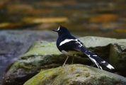 """生态优,鸟类多,资深观鸟师分享肇庆""""美丽身影"""""""