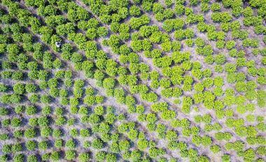轉變農業發展方式 高要菜農變身花農