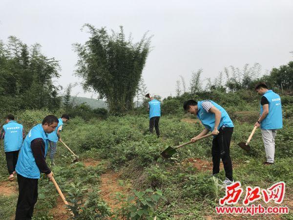 社区矫正人员正在基地后山除草。 西江日报记者 夏紫怡 摄