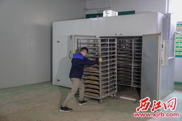 德鑫农业发展有限公司的工人用机器处理药材。 西江日报实习生 曹笑 摄