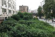 市十五小背后空地杂草丛生惹蚊虫
