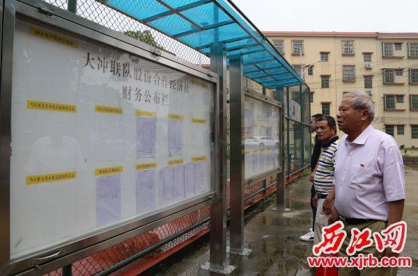 邓祖强(右一)在看大冲联队股份合作经济社的公告栏。 西江日报通讯员 谭迎三 摄