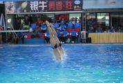 省少年儿童跳水分区赛在肇落幕