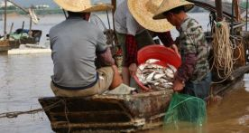 開漁啦!西江河鮮新鮮上市!吃貨們趕緊走起~