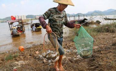 昨日零时起西江开渔 新鲜鱼虾重上餐桌