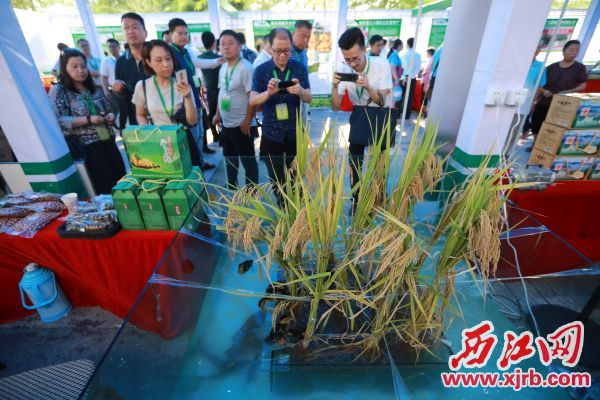 怀集一产业合作社把立体种养搬到现场展示,吸引了众多客商、嘉宾关注。 西江日报记者 刘春林 摄