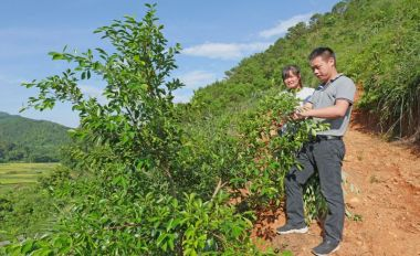 封开县长岗镇前程村建设特色扶贫项目小叶榕种植基地