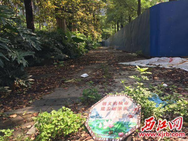 人行道上堆积着厚厚的落叶。 西江日报记者 杨永新 摄