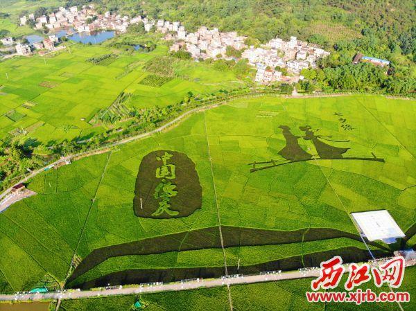 德庆罗洪村田园生态美如画。