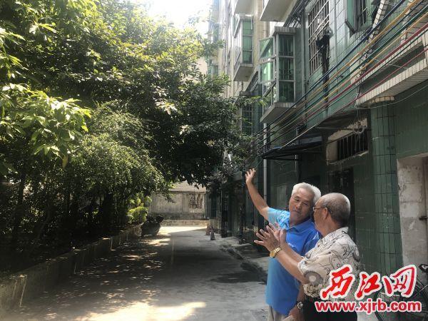 韦意勋(左)和热心党员刘叔,在商讨如何给小区绿树剪枝减少隐患。 西江日报记者 潘粤华 摄