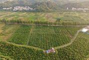 抓机遇 寻转机 高山低谷始向前 德庆不懈壮大农业发展带领农民奔康致富