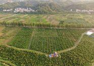 德庆不懈壮大农业发展带领农民奔康致富