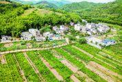 念好种养经 农民致富忙 ——封开县坚持农业农村优先发展实施乡村振兴战略