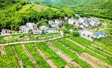 封开县坚持农业农村优先发展实施乡村振兴战略