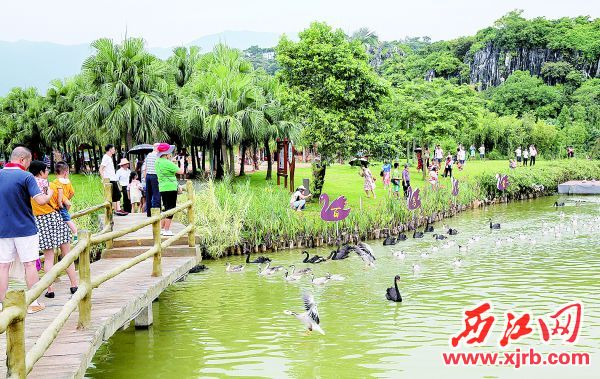 市民游客在星湖湿地公园一边游览玩耍,一边观看万鸟放飞。