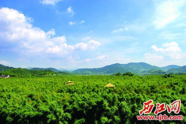 广宁县拥有108万亩竹林,全省唯一一个国家竹子森林公园。
