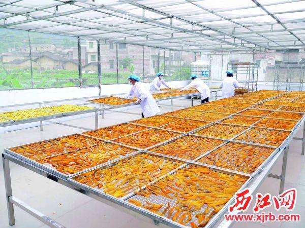 备受消费者欢迎的广宁县潭布蕃薯干。