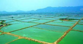 首批100个广东省级专业镇名单公示!肇庆这些地方上榜,有你的家乡吗?