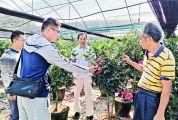 德庆四季茶花飞入北京花坛 计划打造成莫村知名产业,带动贫困户脱贫致富