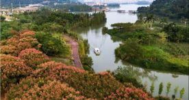 肇庆的树,美成了画!这座树美花香的城,你一定会爱上……