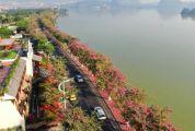 打卡肇慶最美最浪漫景色,十里西堤紫荊花道稱霸朋友圈!