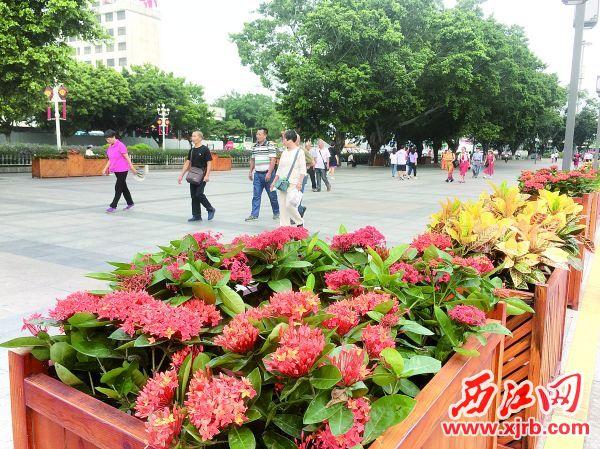 街头小景建设让市民享有更美的环境。 西江日报记者 赖小琴 摄