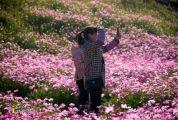 今天冬至,你在北方雪花紛飛,我在封開暖陽花開!