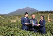 减税降费为怀集茶产业注入新动力