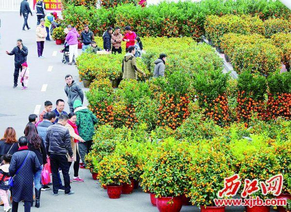 年桔区人来人往。西江日报记者 梁小明 摄