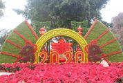营造浓厚节日氛围 端州1.8万盆鲜花扮靓街市