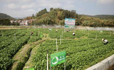 疫情防控做好 农业生产不误