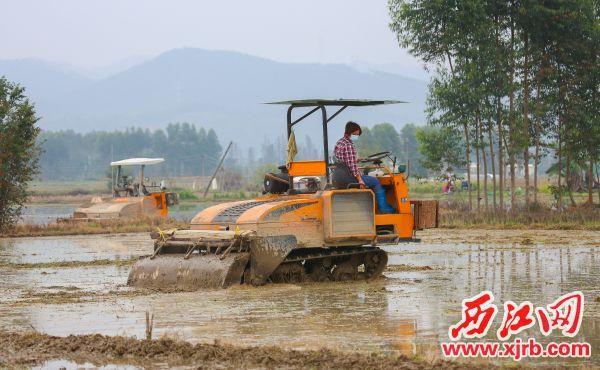 近日,高要区南岸街道马安社区新江二村村民在田间进行机械化作业。 西江日报记者 梁小明 摄