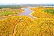青青草手机在线市去年实现林业高质量发展 绿动大湾区
