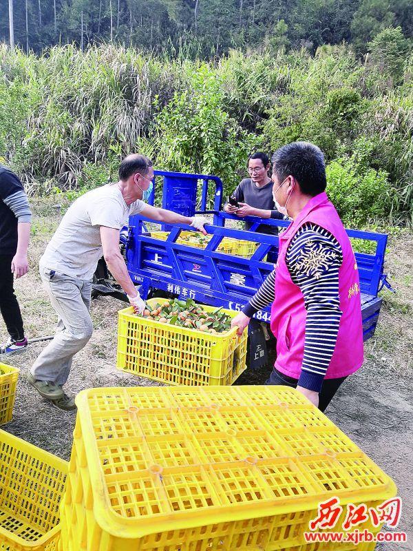 广宁电商帮农民销售农产品。