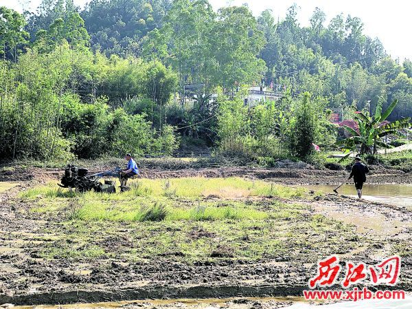 村民用松土机翻松泥土。
