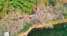 政府支持、企业自救,肇庆文旅市场逐步回暖