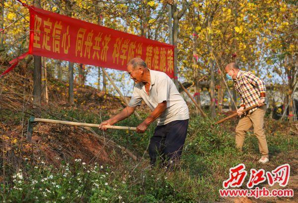 村民在林场里劳作。