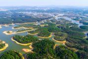 肇慶市全力加快推進林分改造