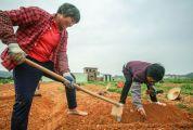 五大舉措推動貧困戶返崗復工就業 肇慶市294個扶貧項目復產率超9成