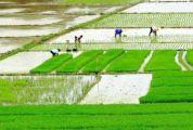 """新增近3萬畝!保障群眾""""米袋子"""",肇慶定下這個目標......"""