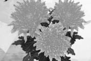 别样清明一样情!上午10点,青青草手机在线市鲜花代祭公益活动进行现场直播!